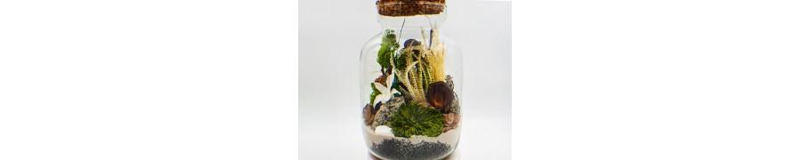 Lasy w szkle, słoju i słoiku – atelier - FloralaFun